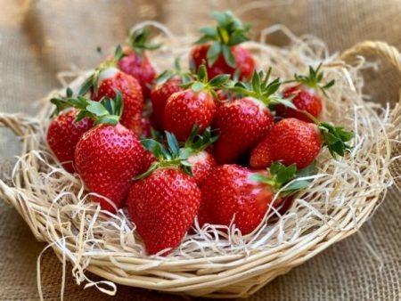 fraise de Carros