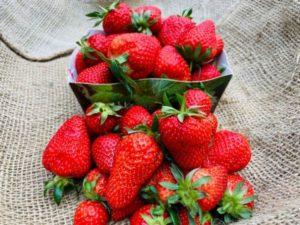 fraises de carros