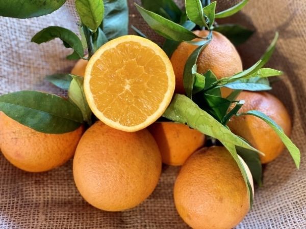 orange douce non traitée