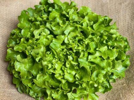 salade batavia bio locale