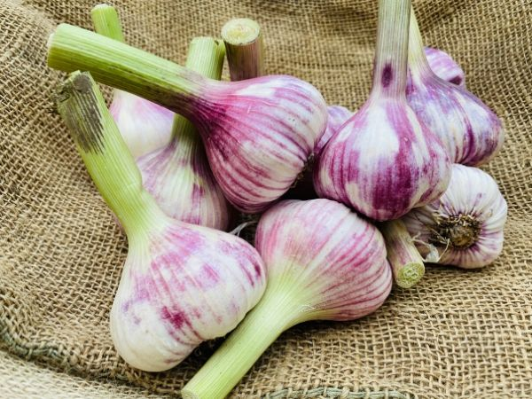 ail violet frais
