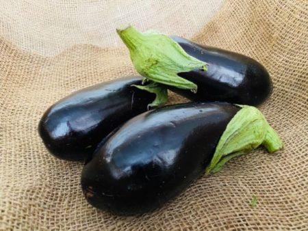 aubergine noire