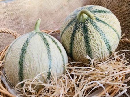 melon (circuit court)