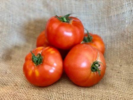 tomate ronde bio locale