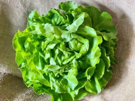 salade laitue bio locale