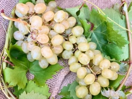 raisin blanc provence