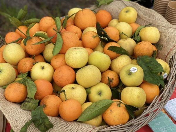 corbeille de fruits frais bio locaux