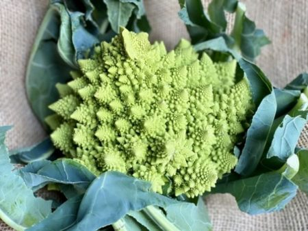 chou romanesco bio local