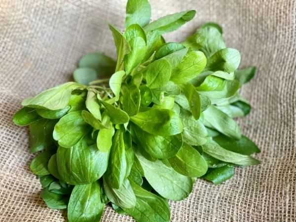 salade mâche bio locale alpes-maritimes