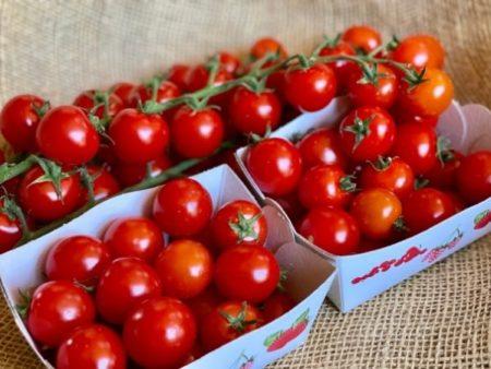tomate cerise bio locale